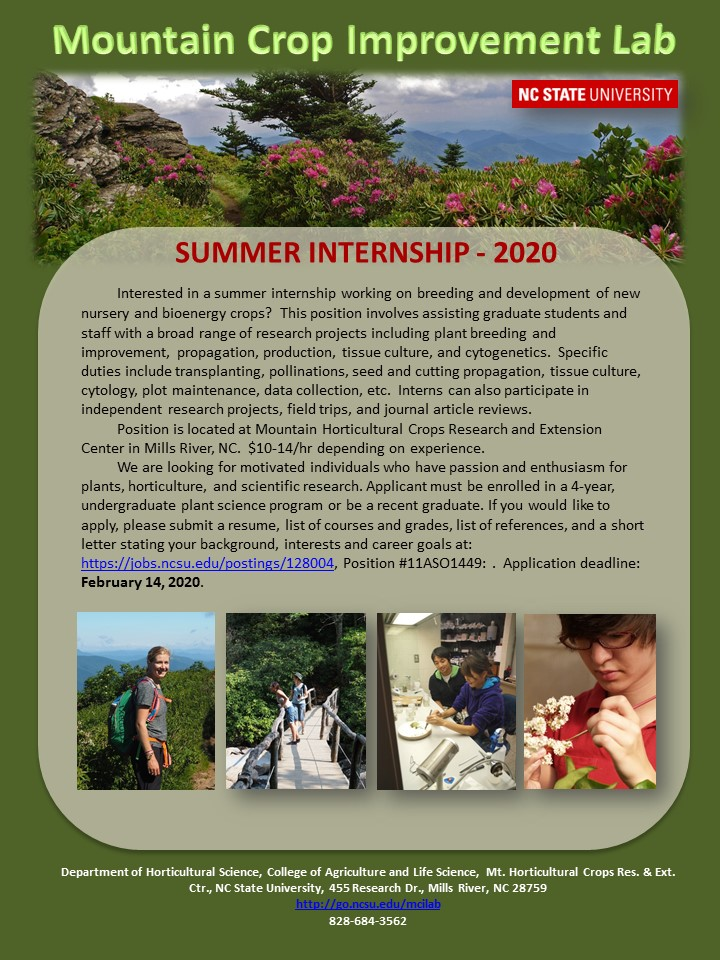 Internship flyer image